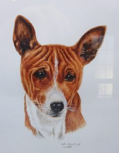 Watercolour painting 'BASENJI' ~ original art by artist Amanda Hawkins, mounted & framed, detailed Basenji African hunting dog portrait