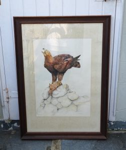 Painting of Golden Eagle with Rabbit by Patrick McLaughlin, watercolour, circa 1968