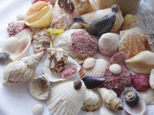 mixed seashells