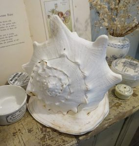 Vintage seashell ~ large horned helmet conch shell ~ Cassis cornuta ~ garden ornament ~ genuine large sea shell ~ coastal decor
